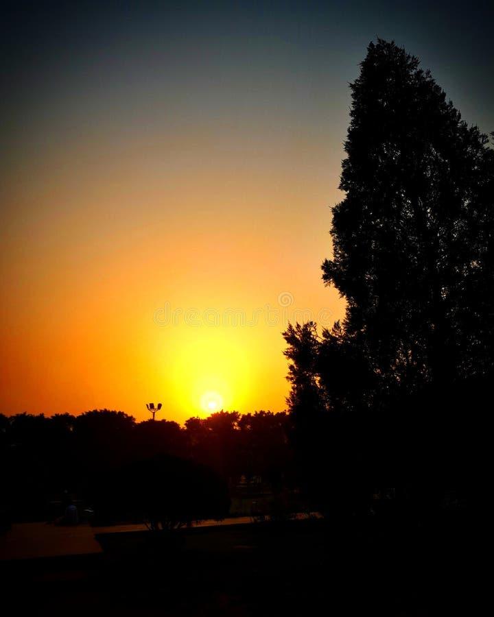 Wschodu słońca drzewo zdjęcia royalty free