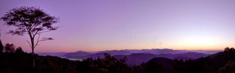 Wschodu słońca drzewo obraz stock