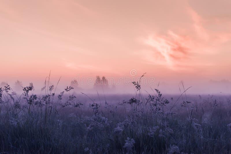 Wschodu słońca pole kwitnienie menchii łąki kwiaty zdjęcia royalty free