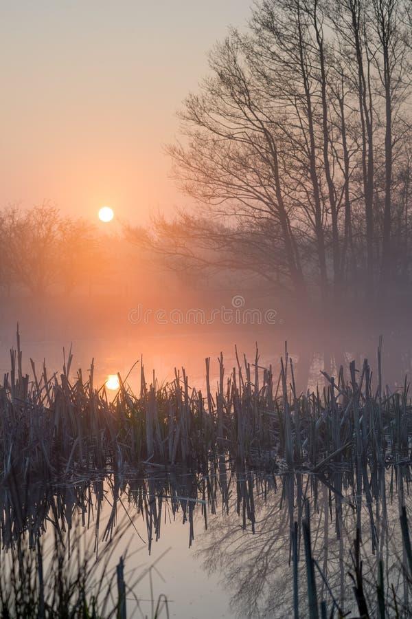 Wschodu słońca staw i łamający pośpiech obrazy royalty free