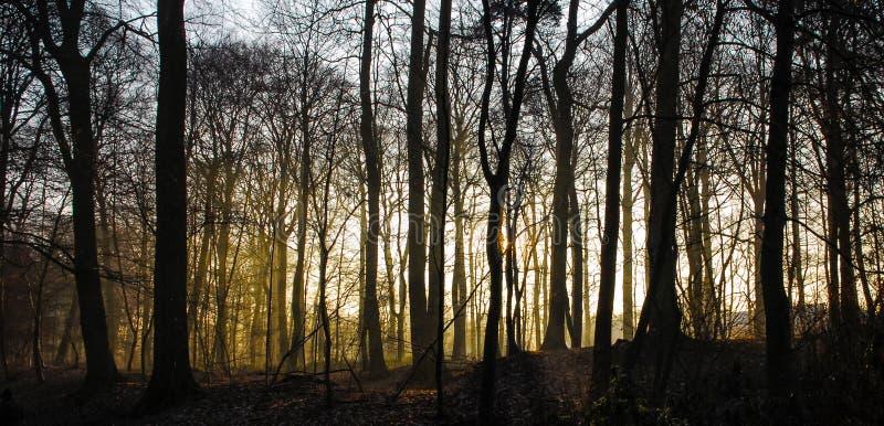 Wschodu słońca zmierzch w forrest zimie żadny liść zimna mgłowa mgła fotografia royalty free