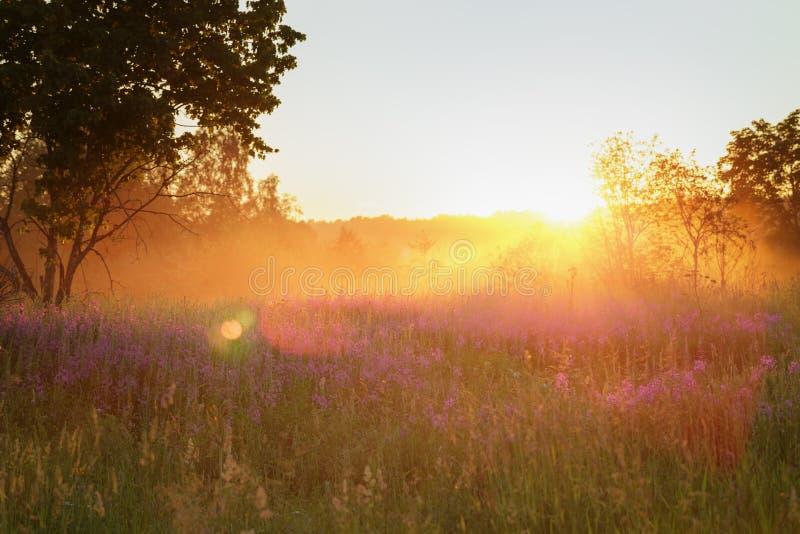 Wsi łąka w pięknym zmierzchu zdjęcie royalty free
