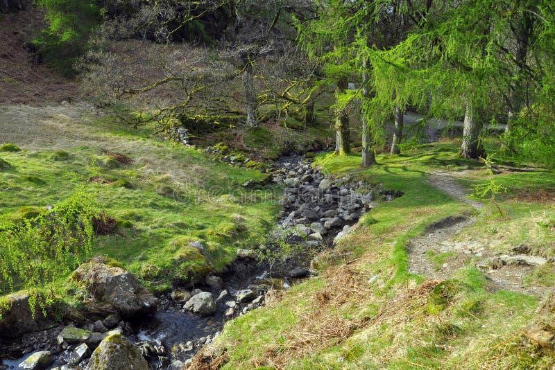 Download Wsi Angielska Lasowa Halizny Rzeka Zdjęcie Stock - Obraz: 19858340