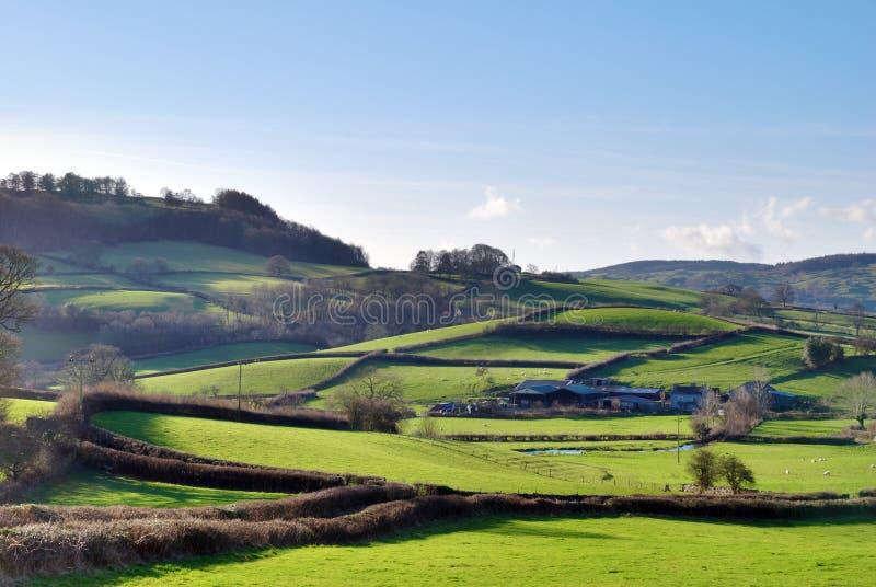 wsi anglików zielony bujny zdjęcie royalty free