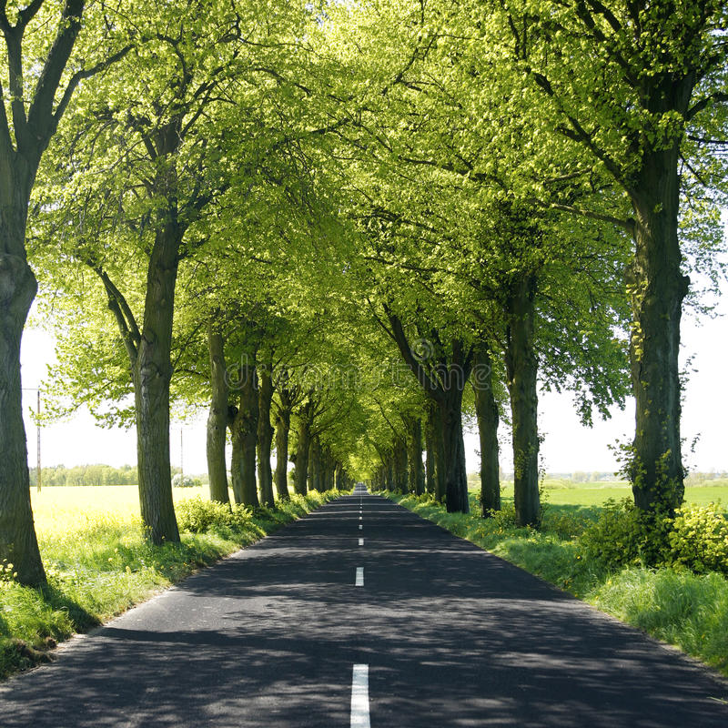wsi drzewo prążkowany drogowy fotografia stock