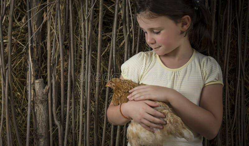 Wsi dziewczyna trzyma kurczątka w kukurudzy zdjęcie royalty free