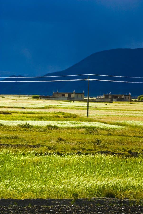 wsi tibetan zdjęcia royalty free