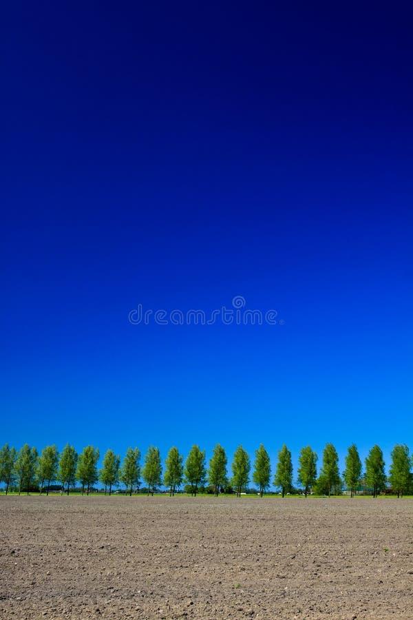 wsi zmieloni nieba drzewa obraz stock