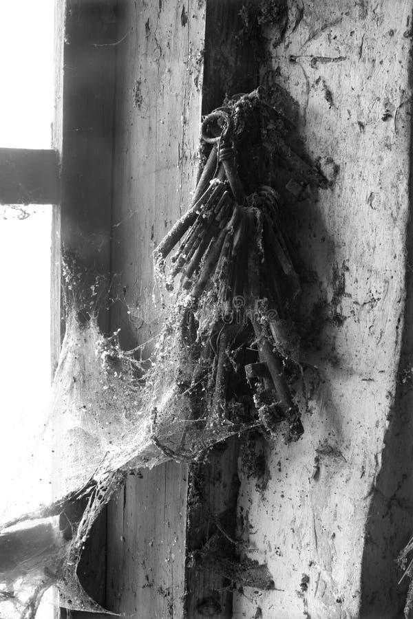 wskazówka pająka sieci zdjęcie royalty free