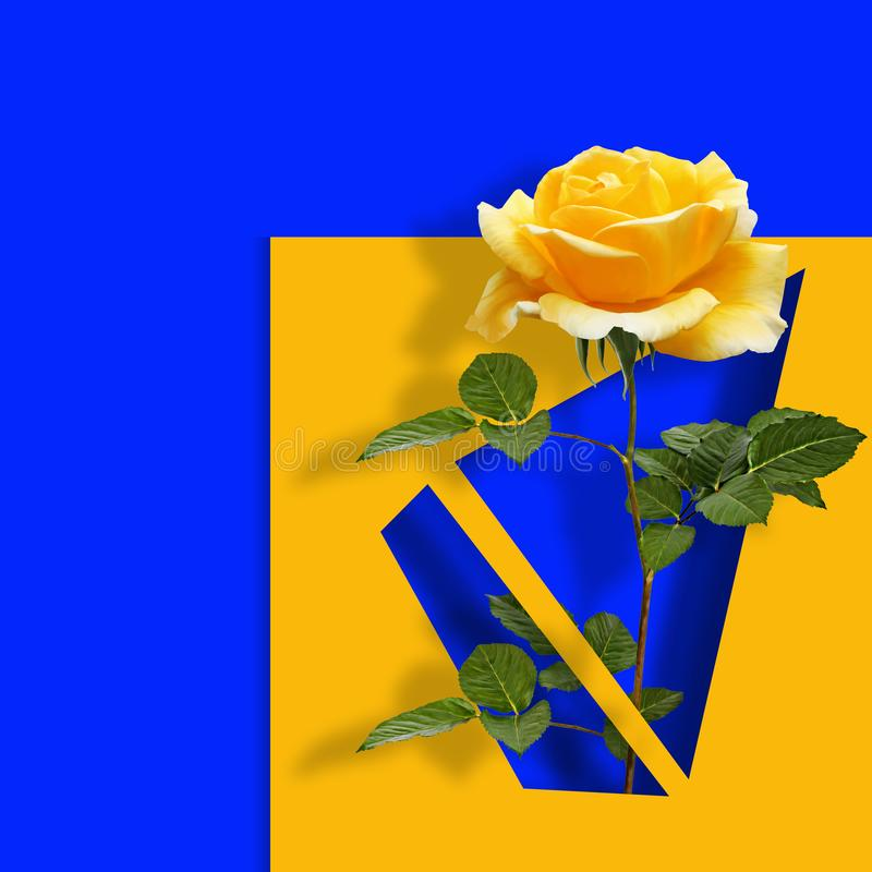 Współczesny sztuka współczesna plakat z kolor żółty różą na błękitnym abstrakcjonistycznym tle ilustracja wektor