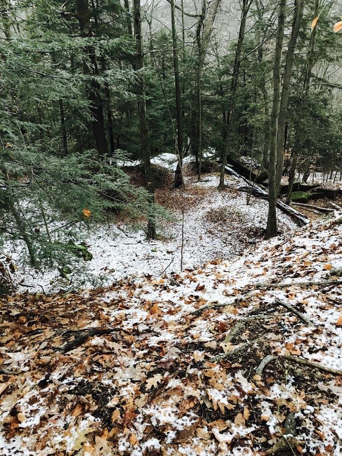 Wspaniała ścieżka PRZEZ PIĘKNEGO lasu ZAKRYWA NA śniegu NA obich stronach obrazy royalty free