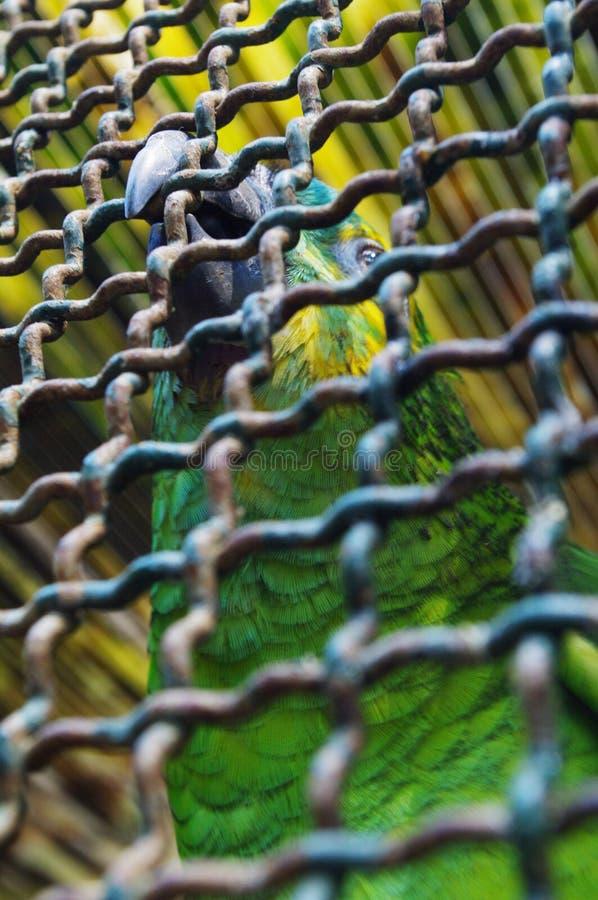 Wspaniała papuga fotografia royalty free