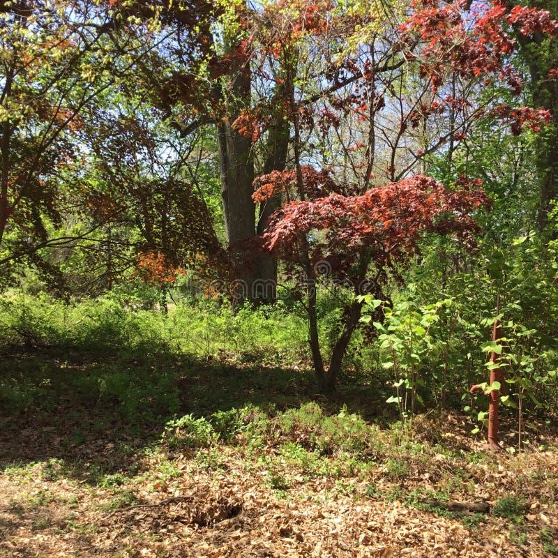 Wspaniała zielona własność w Anne Arundel okręgu administracyjnym w Maryland fotografia stock