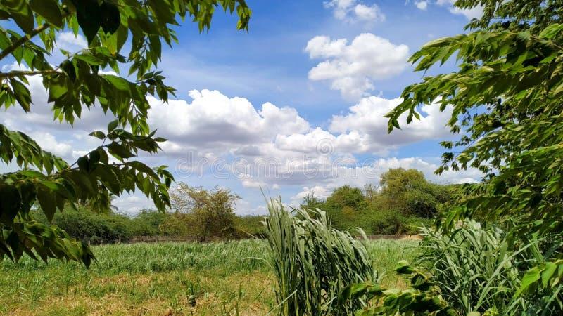 Wspaniałe chmury w niebie obraz royalty free