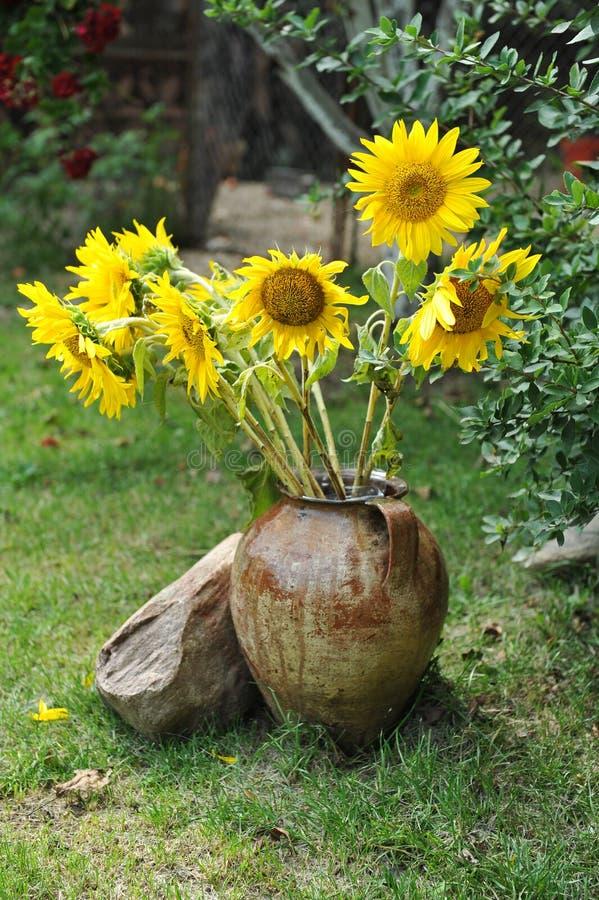 Wspaniały bukiet żywi słoneczniki w antykwarskim glinianym garnku outdoors blisko skały na zielonej trawie Gliniany flowerpot z s fotografia royalty free