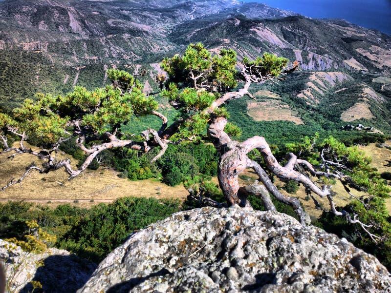 Wspaniały Crimea Widok od dekorujący z starymi sosnowymi górami błękitny morze zdjęcie stock