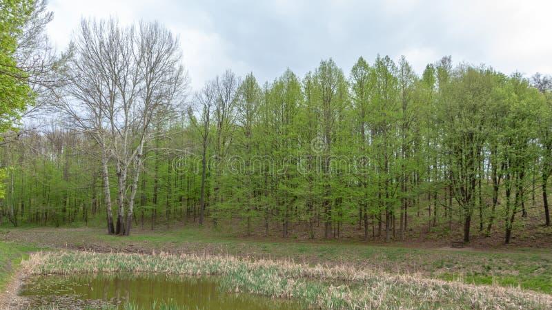 Wspaniały krajobraz lato zieleni łąka przy świtem, zdjęcia royalty free