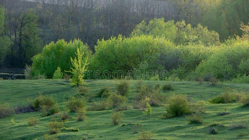 Wspaniały krajobraz lato zieleni łąka przy świtem, fotografia stock