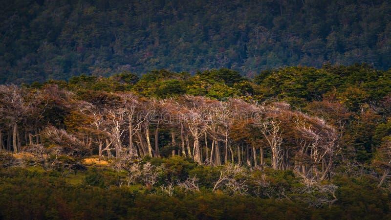 Wspaniały krajobraz Patagonia ` s Tierra Del Fuego park narodowy zdjęcie royalty free