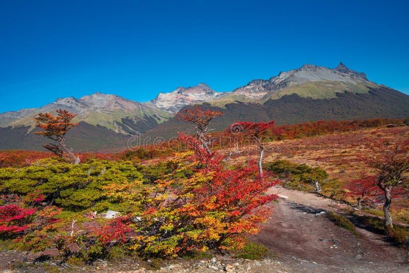 Wspaniały krajobraz Patagonia ` s Tierra Del Fuego park narodowy zdjęcia royalty free