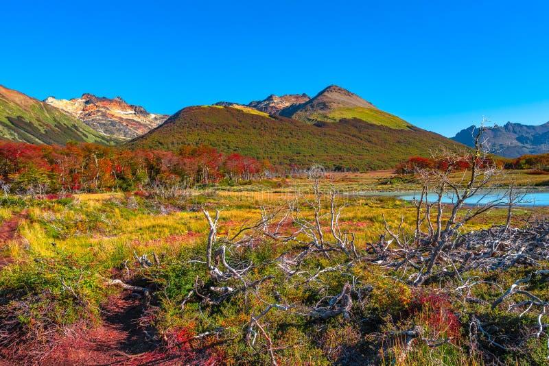 Wspaniały krajobraz Patagonia& x27; s Tierra Del Fuego park narodowy obrazy stock