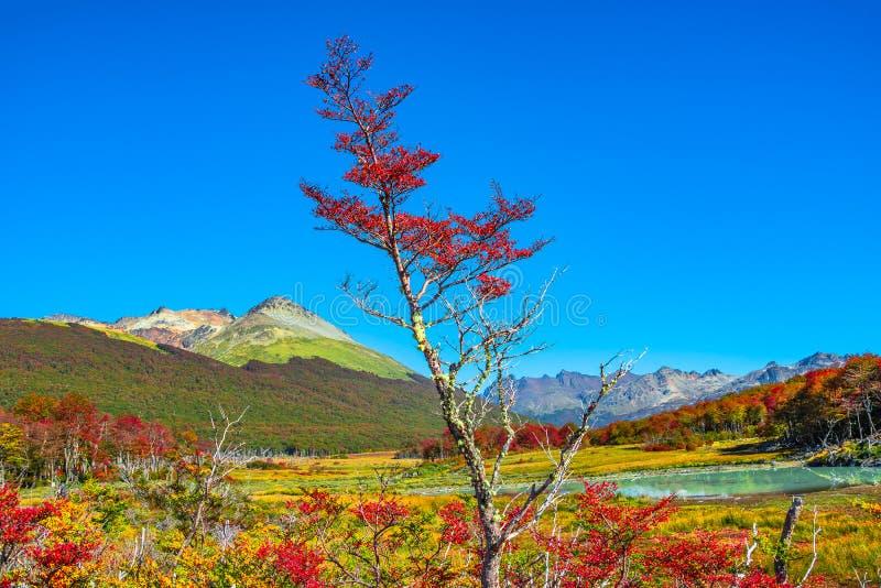 Wspaniały krajobraz Patagonia ` s Tierra Del Fuego park narodowy obrazy royalty free