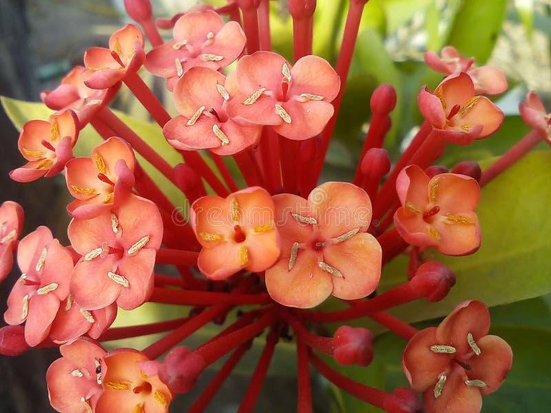 Wspaniały kwiat obraz stock