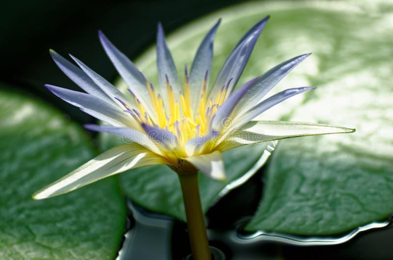 Wspaniały kwiat zdjęcie royalty free