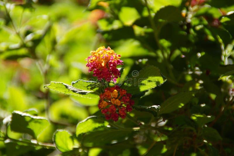 Wspaniały kwiat z pomarańczowym skocznym kolorem - Frontowy widok fotografia stock