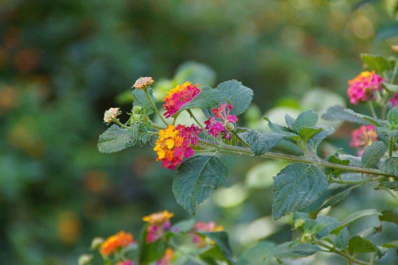 Wspaniały kwiat z skoczni kolory - Frontowy widok zdjęcia royalty free