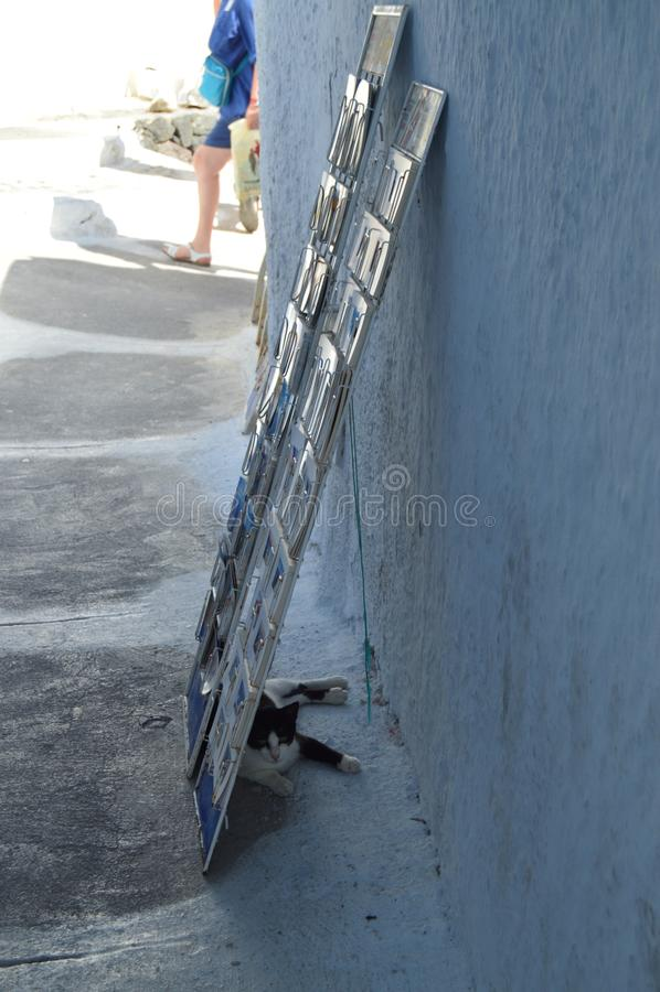 Wspaniały strzał uchodźcy kot Za eksponentem pocztówki Od Pamiątkarskiego sklepu W Pyrgos Kallistis Na wyspie Santo zdjęcie royalty free