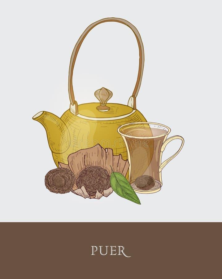 Wspaniały teapot, przejrzysta szklana filiżanka z moczyć herbaty, surowy pu i świezi liście na szarym tle, smakowity ilustracja wektor