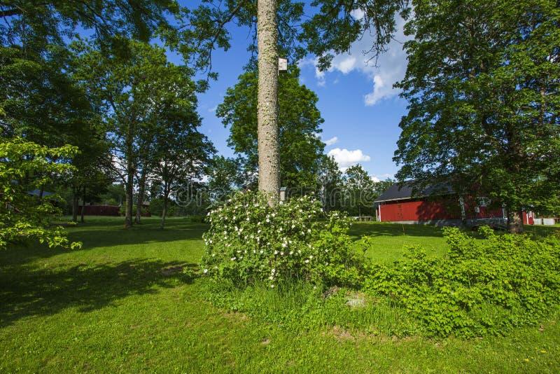 Wspaniały widok intymny ogród Zieleni drzewa, kwiatu krzak na niebieskim niebie z bielem chmurnieją tło obrazy royalty free