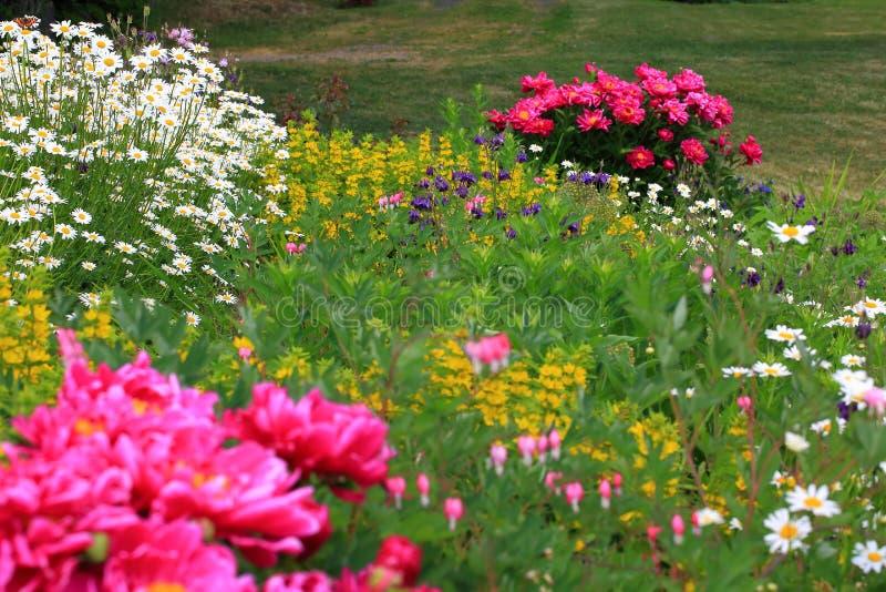 Wspaniały widok różny jakby kwitnie na trawa gazonu tle Piękny natury tło, tekstura/ zdjęcie stock