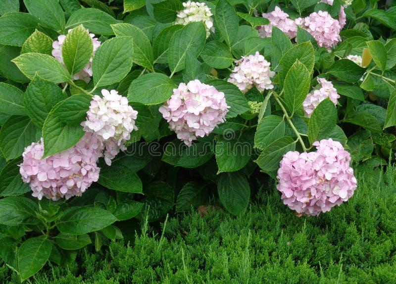Wspaniali kwiaty w zieleni obrazy royalty free