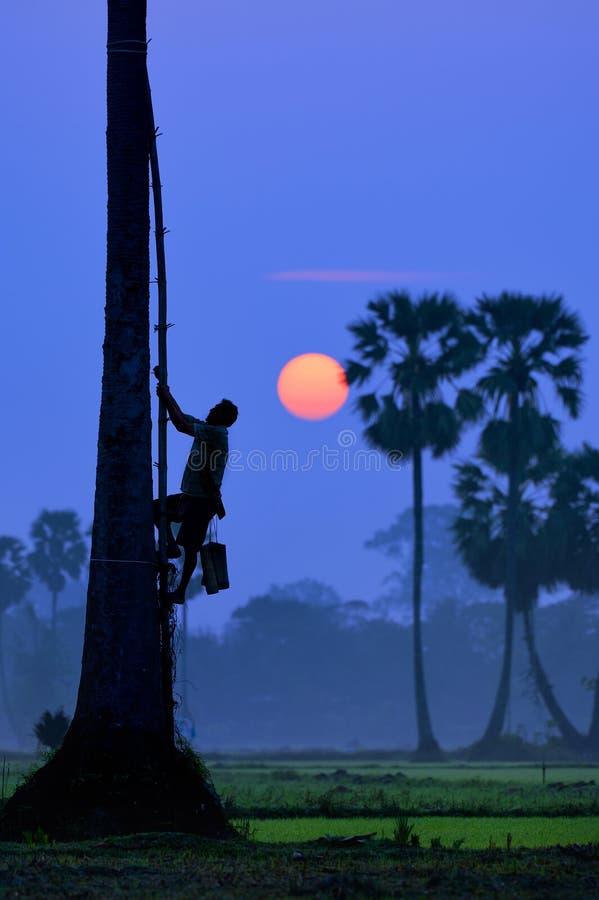 Wspina się drzewka palmowego fotografia royalty free