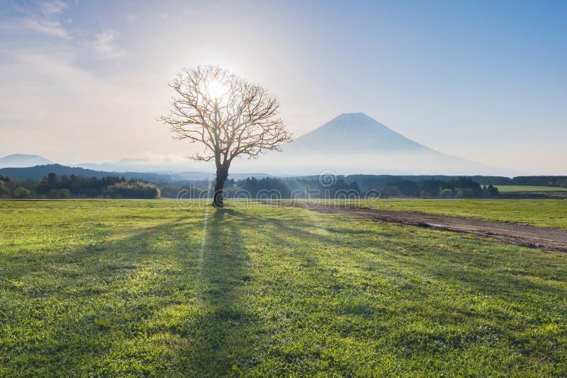 Wspina się Fuji z promieniem światło przez wysuszonego drzewa w ranku zdjęcia royalty free