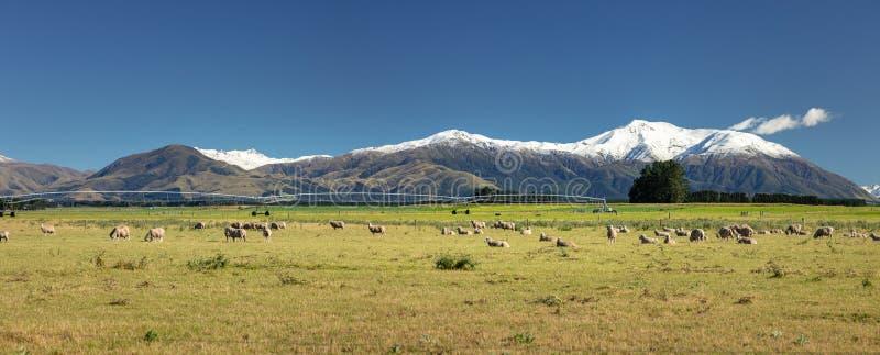 Wspina się Taylor i góry Hutt scenerii w południowym Nowa Zelandia obrazy stock
