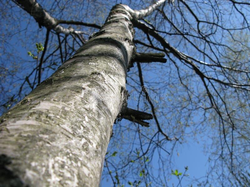 Wspina się up drzewa fotografia stock