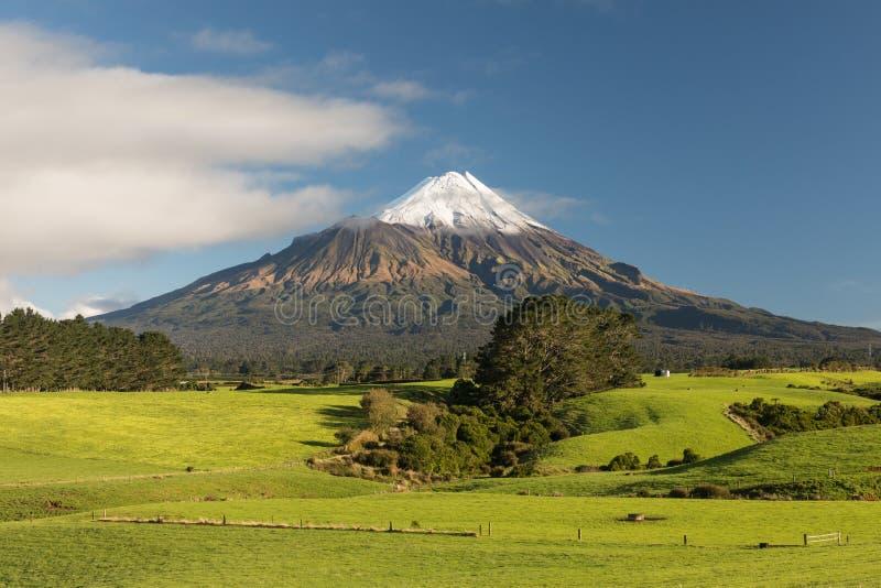 Wspina si? Taranaki pod niebieskim niebem z trawy polem i krowami jako przedpole w Egmont parku narodowym nowe Zelandii fotografia royalty free