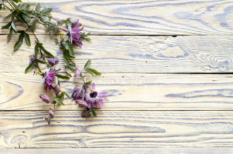 Wspinaczkowa roślina passionflower zdjęcia royalty free