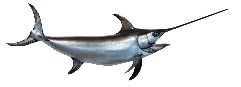 Wspinający się Swordfish obraz stock
