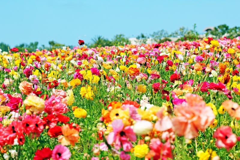 wszędzie kwiaty obraz stock