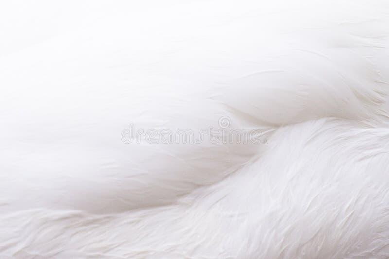 Wszystkie białego piórka tło zdjęcia royalty free