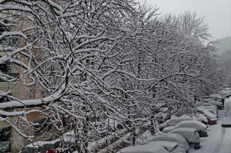 Wszystkie biel pod śniegiem, zimy sceneria przy drzewami zakrywającymi z ciężkim śniegiem i ulica, obrazy stock
