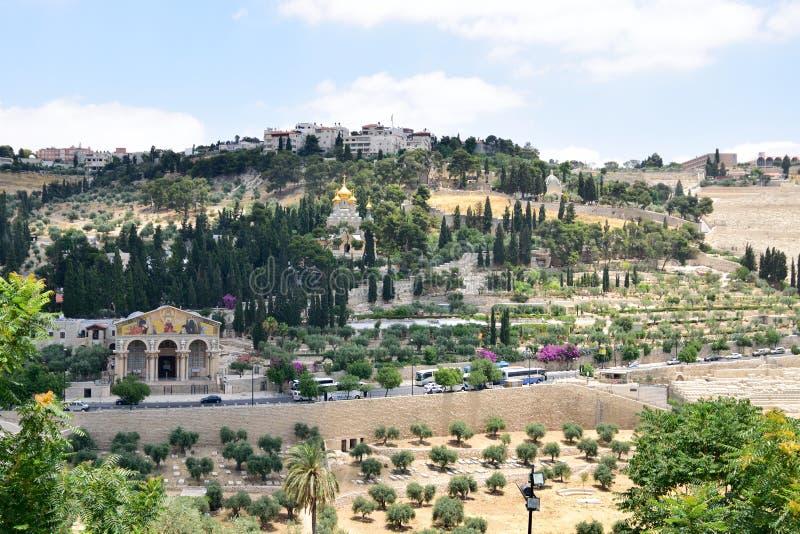 wszystkie wieków kościelnej cyprysowej Jerusalem góry stare oliwki zaludniają drogę fotografia royalty free