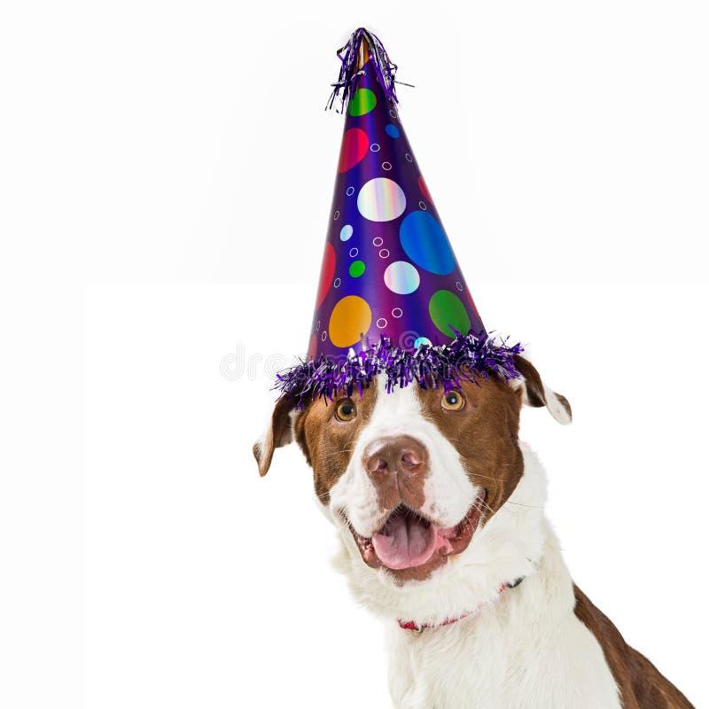 Wszystkiego Najlepszego Z Okazji Urodzin pies Jest ubranym Partyjnego kapelusz zdjęcie royalty free