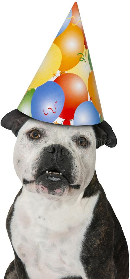 Wszystkiego Najlepszego Z Okazji Urodzin przyjęcia pies Odizolowywający obrazy stock