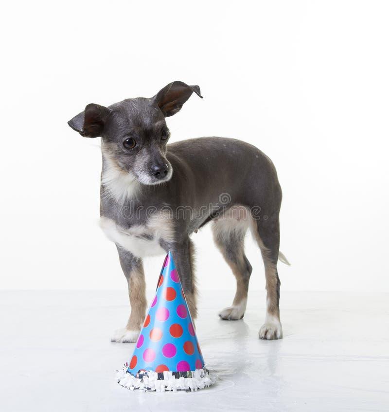 Wszystkiego Najlepszego Z Okazji Urodzin szczeniak obrazy royalty free