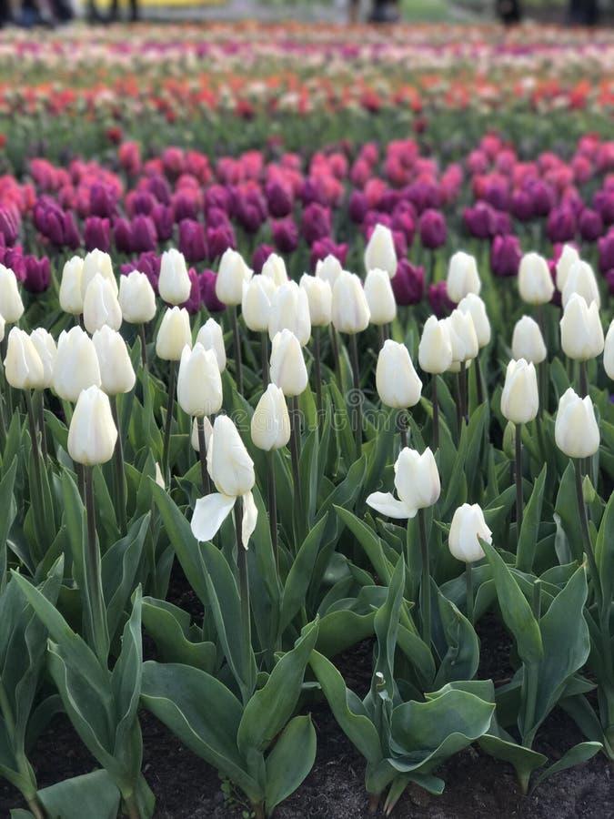 Wszystko o kwiacie zdjęcia stock